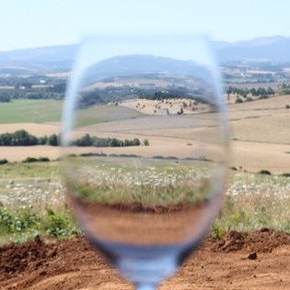 View through a glass at Brittan Vineyards